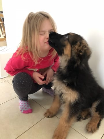 Child-friendly family dogs, which breed is best