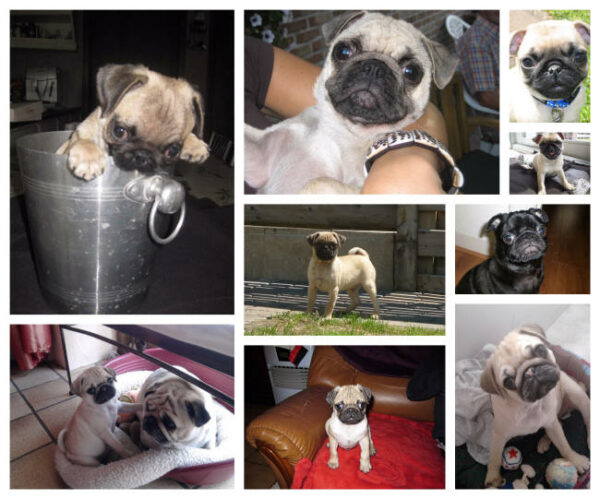 mops collage 1